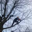 Спилить, обрезать, удалить дерево