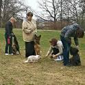 Воспитательная дрессировка щенков от 4 месяцев в группе., фотография 7