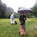 Воспитательная дрессировка щенков от 4 месяцев в группе., фотография 9
