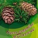 Оптовая продажа кедрового ореха (ядро)