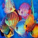 Продам аквариум фэн-шуй  для привлечения  денежной  удачи