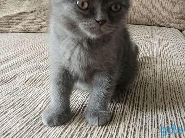 Котёнок, фотография 1