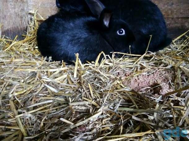 кролико, фотография 2