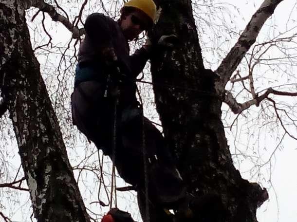 Удалить, спилить дерево, фотография 1