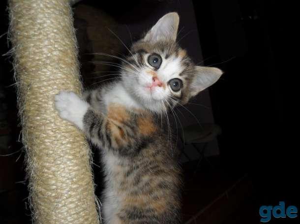 Котята в добрые руки, фотография 5