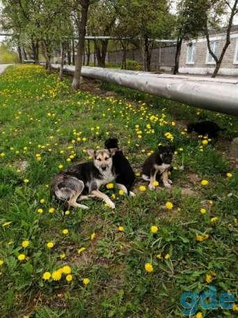 ОЧЕНЬ СРОЧНО. Прекрасный щенок в САМЫЕ ДОБРЫЕ РУКИ!, фотография 4