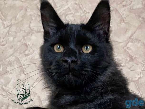 Котята Maine Coon - Эксклюзив!, фотография 7