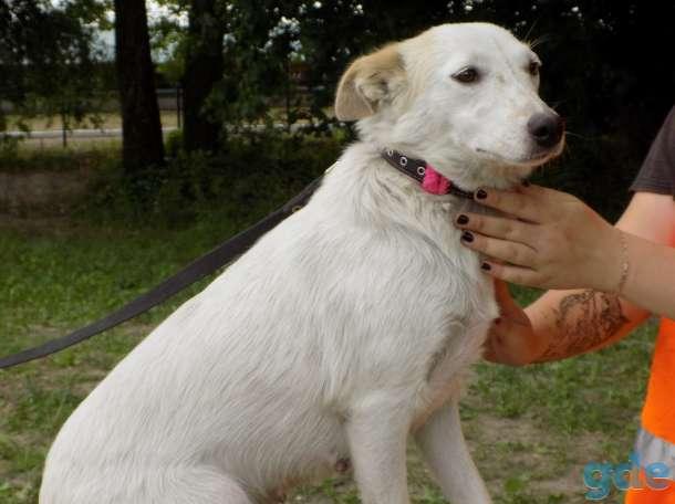 Собака Лаки в добрые руки, фотография 3