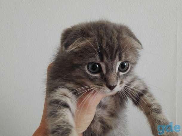 Продается котёнок, фотография 1