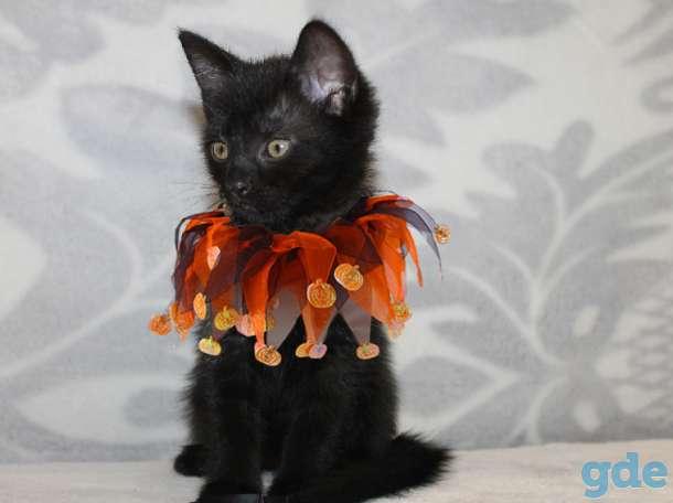 Кошечка 2,5 месяца, фотография 1