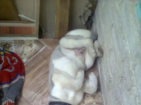 щенок, фотография 1