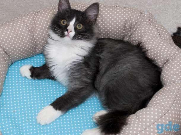Кошечка Мята, фотография 3