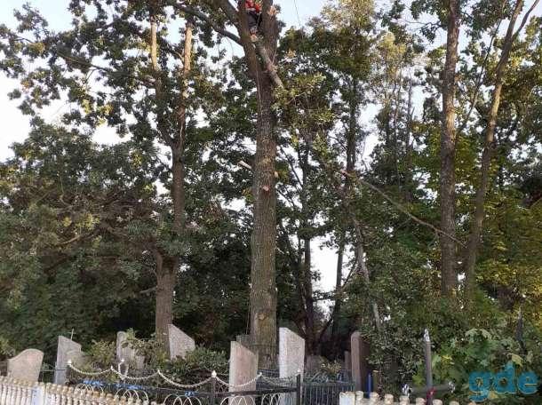 Удаление аварийных деревьев, фотография 4