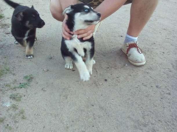 Подарим щенка, фотография 2
