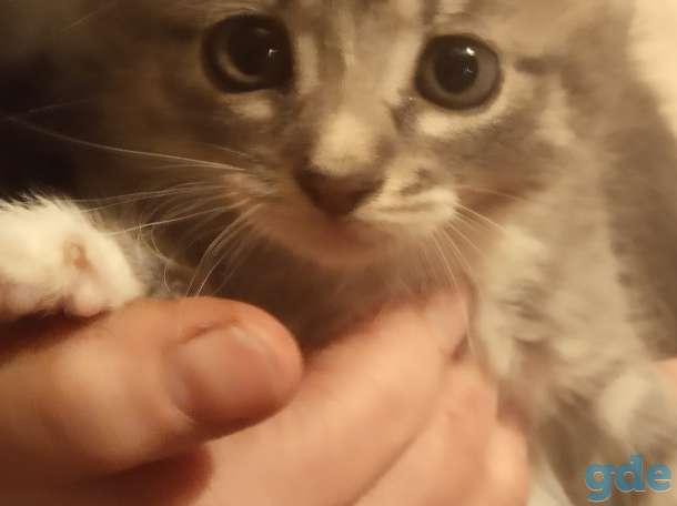 Милые котята в добрые руки., фотография 1