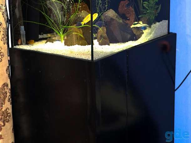аквариум 200 литров, фотография 2