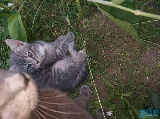 Отдам в хорошие руки котят, фотография 3