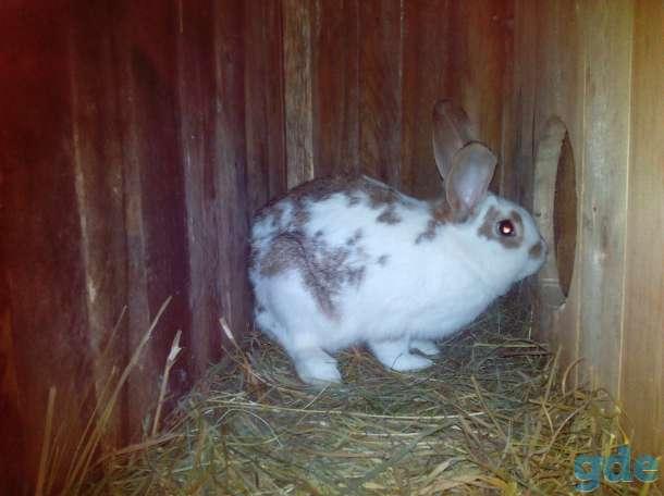 Продам кроликов, фотография 1