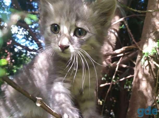 Отдам котят, фотография 2