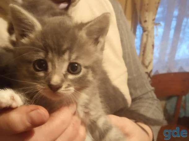 Милые котята в добрые руки., фотография 3
