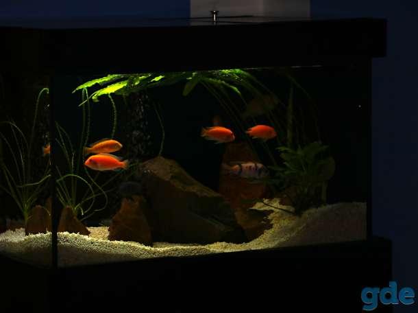аквариум 200 литров, фотография 5