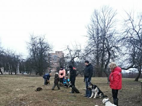 Воспитательная дрессировка щенков от 4 месяцев в группе., фотография 3