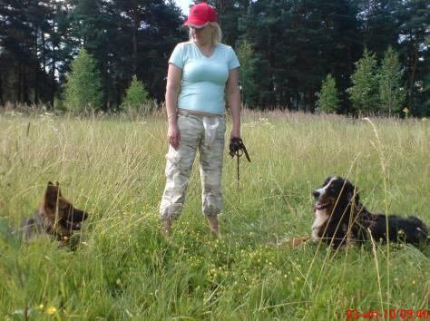 Воспитательная дрессировка щенков от 4 месяцев в группе., фотография 5