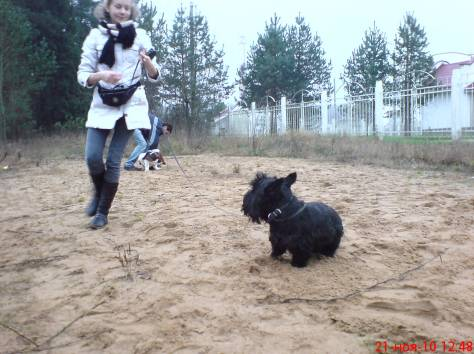 Воспитательная дрессировка щенков от 4 месяцев в группе., фотография 6