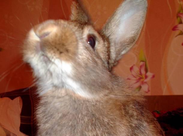 Продам декоративного кролика!, фотография 1