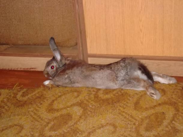 Продам декоративного кролика!, фотография 2