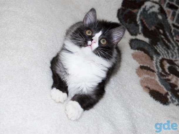 Кошечка Мята, фотография 5