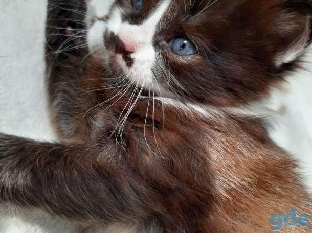 Котята в добрые руки, фотография 1