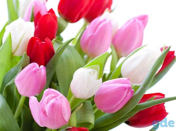 Продажа свежих тюльпанов, фотография 1