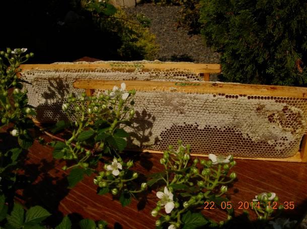 пчелопакеты, фотография 1