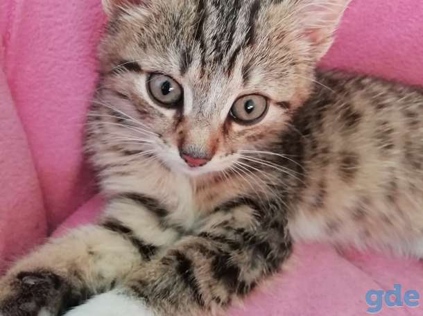 Котенок, фотография 1