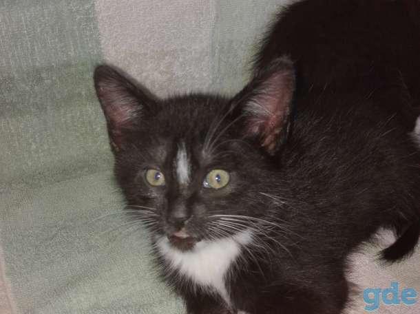 Котенок, фотография 3