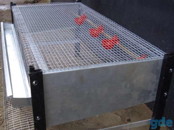 Клетки для перепелов полной комплектации, фотография 3