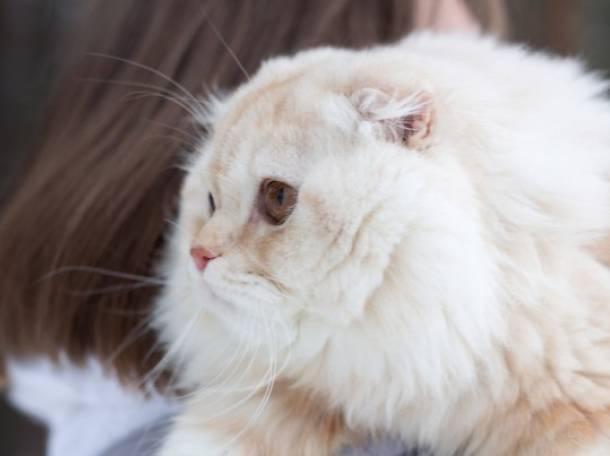 кот для вязки, фотография 1