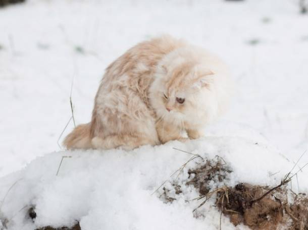 кот для вязки, фотография 2