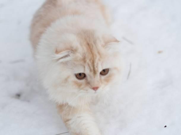 кот для вязки, фотография 3