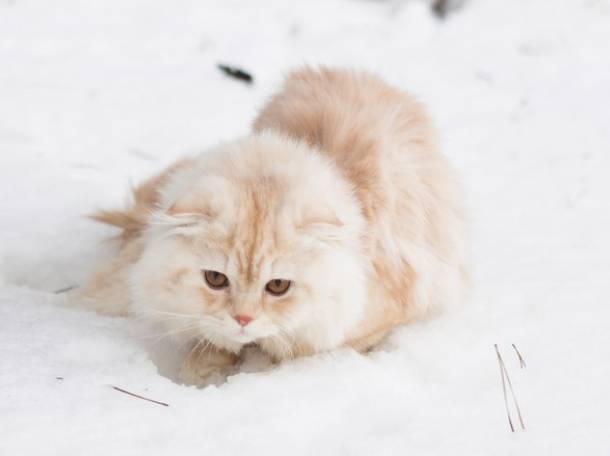 кот для вязки, фотография 4