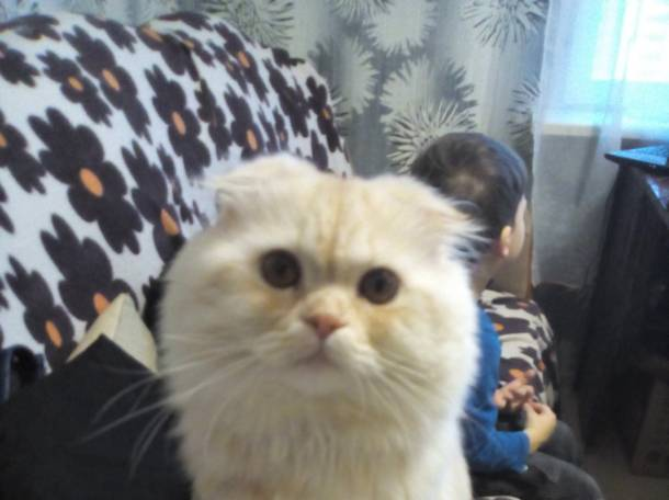 кот для вязки, фотография 6