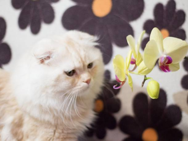 кот для вязки, фотография 7