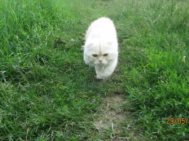 кот для вязки, фотография 8