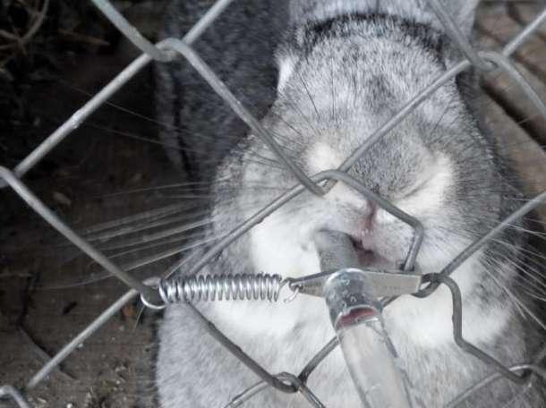 Ниппельные поилки для кроликов в комплекте (поилка, тройник и пружинка  ремкомплект , фотография 1