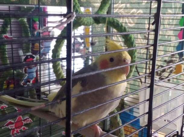 Породам попугая., фотография 4