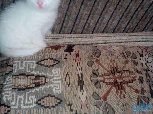 Разноглазый белоснежный котенок ,от роду 1 месяц 2 недели, фотография 4