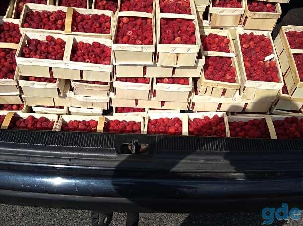Саженцы малины, клубники, фотография 1