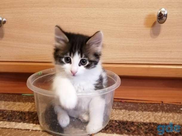 Милые котята солнышки ищут добрых и ответственных хозяев., фотография 3