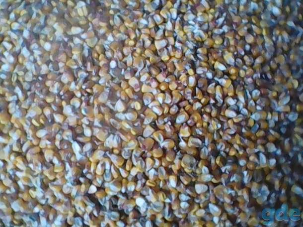 Кукуруза.Овес, фотография 1